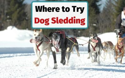Where to Experience Dog Sledding in Europe